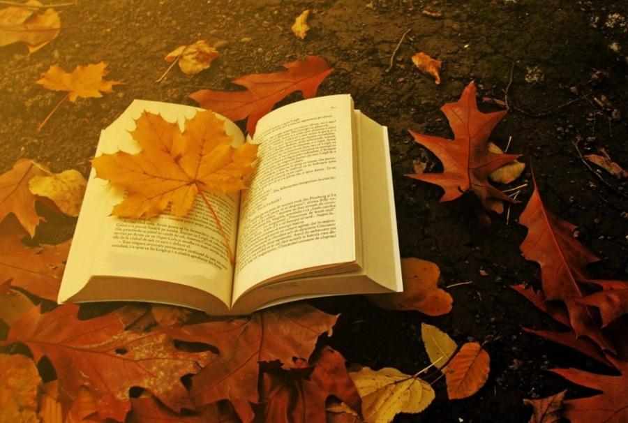 seriex-o-prazer-infinito-na-busca-da-perfeicao-livro